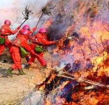 森林火灾和消防灭火